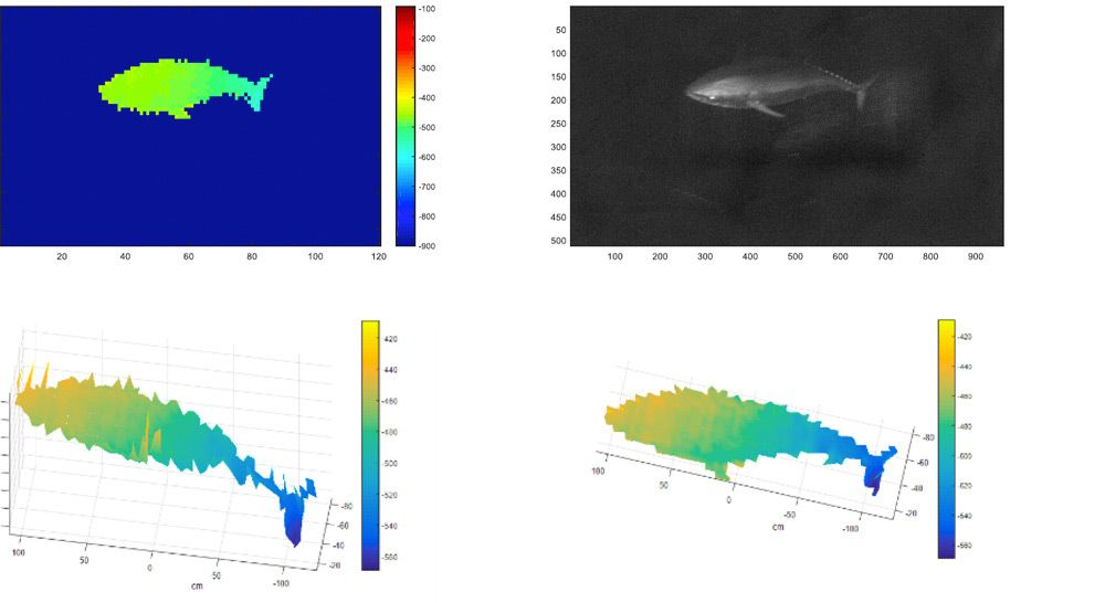 Figure 7. Red tuna measurement results produced by the UTOFIA camera.